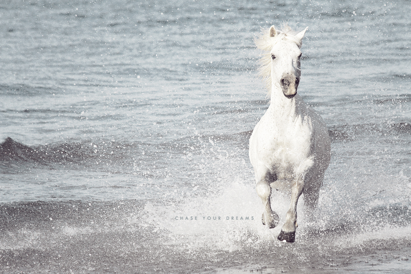 chase your dreams, camargue horses, camargue, france
