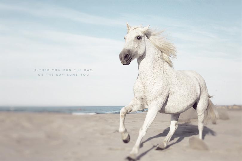 white horse running, horse art, camargue horse