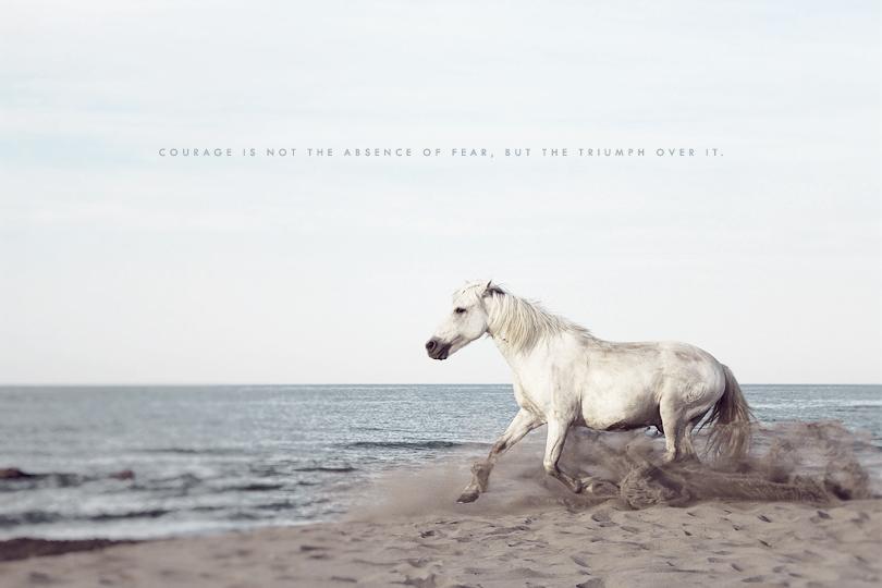 courage, white horse, running, camargue, running horse