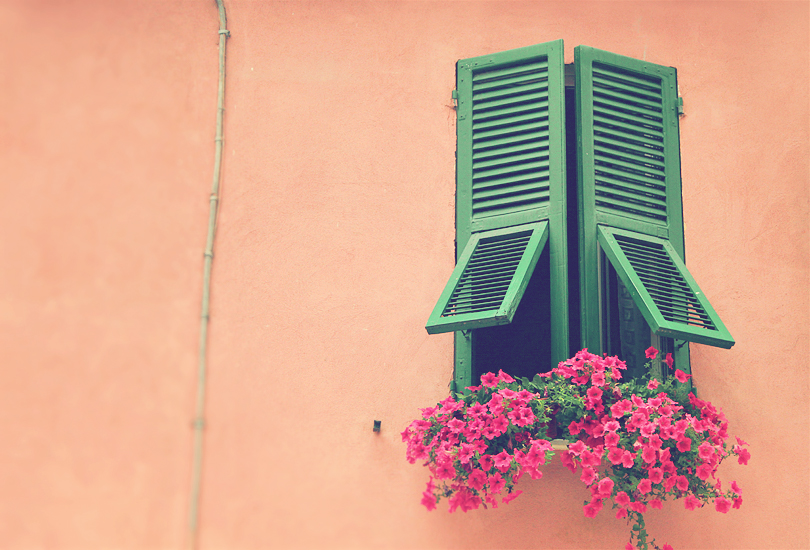 window shutter, art prints, pink flowers, monterosso, cinque terre