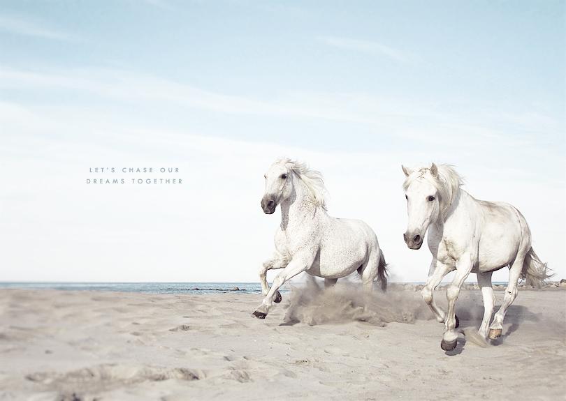 white horses, camargue horses, art print
