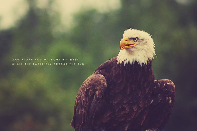 bird photography, eagle photography
