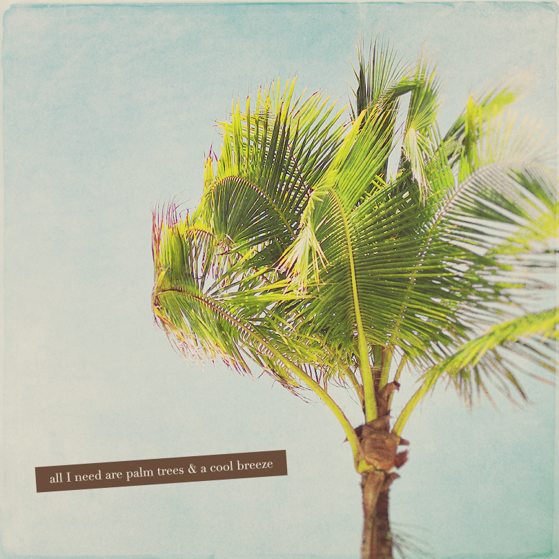palm tree photography