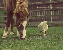 Horse & Duck