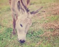 Furry Donkey