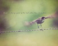 Black Bird Flutter