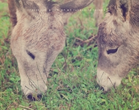 Donkeys Sharing
