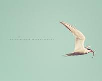 Bird & Prey