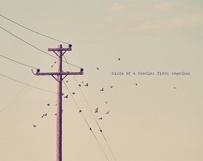Birds Fluttering