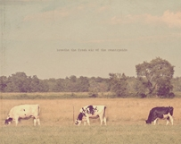 Black & White Cows