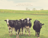 Cows in the Country