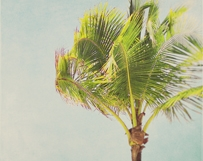 Palm Trees Cool Breeze