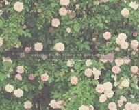 Where Flowers Bloom